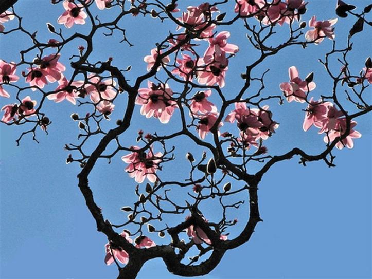 pretty flowers blue sky